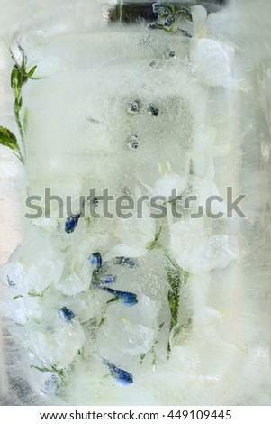 Frozen fresh beautiful flower of campanula and air bubbles in the ice cube - stock photo