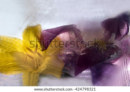 Frozen  fresh beautiful   flower of     iris  and air bubbles in the ice  cube - stock photo