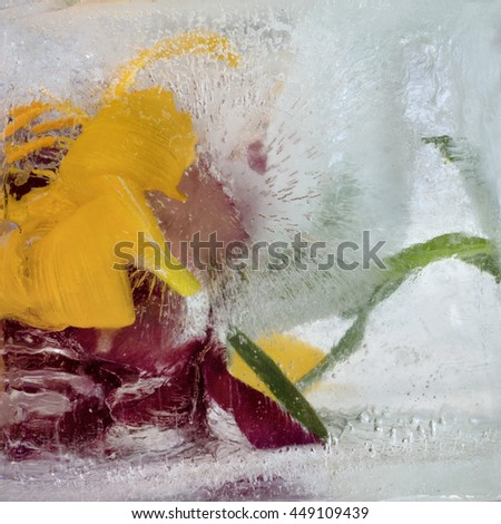 Frozen fresh beautiful flower of lily, and air bubbles in the ice cube - stock photo