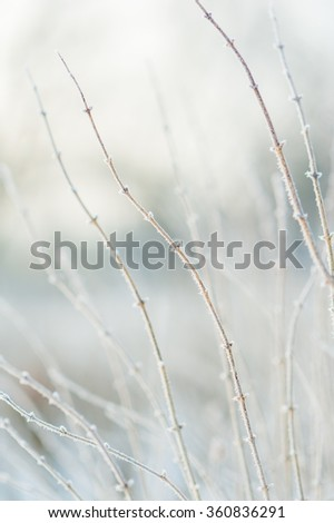 Frozen frosted branches in cold winter with shallow depth of field background image - stock photo