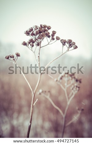 frozen grass and ground frost in winter melancholy background