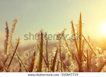 Frozen grass at sunrise close up. Nature background. - stock photo