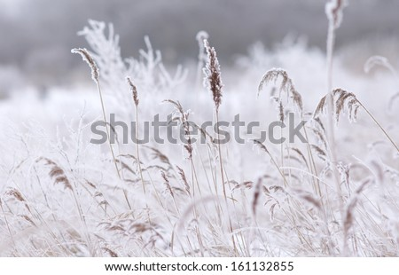 frozen grass / branch during wintertime  - stock photo