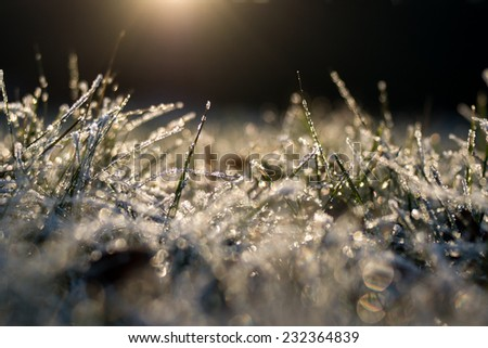 Frozen grass, covered by hoarfrost in golden evening lightning - abstract nature background  - stock photo