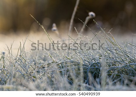 Frozen grass in autumn
