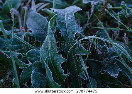 Frozen green grass, chilly morning, ice - stock photo