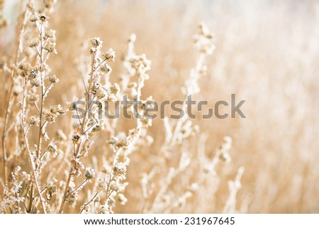 Frozen hoarfrost grass with backlight in early christmas morning  - stock photo