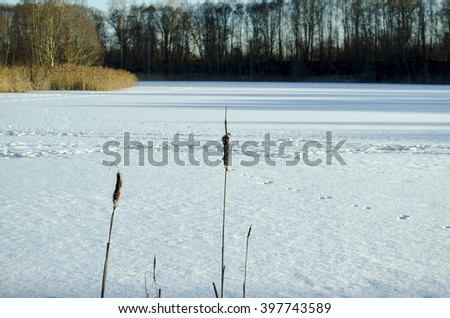 frozen lake, and traces of reeds - stock photo