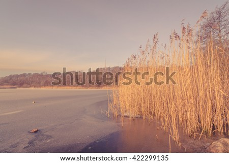 Frozen lake with tall reeds in the morning - stock photo