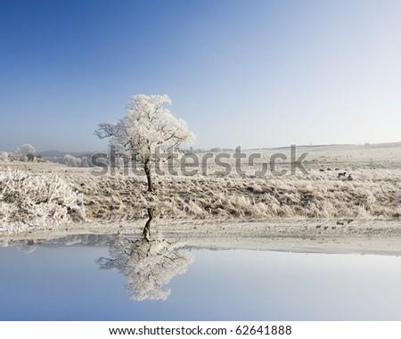 Frozen Landscape - stock photo