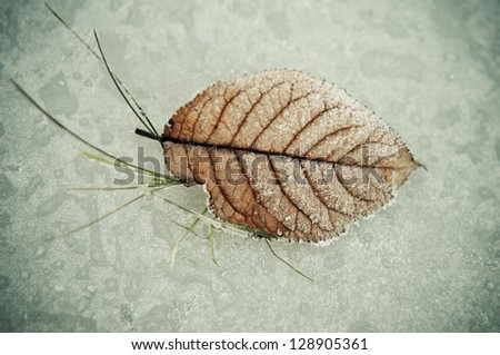 Frozen Leaf 4 - stock photo
