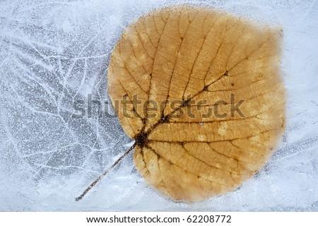 Frozen leaf - stock photo