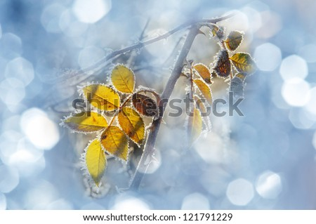 frozen leaves - stock photo