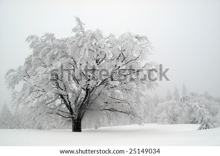 frozen lonely tree - stock photo