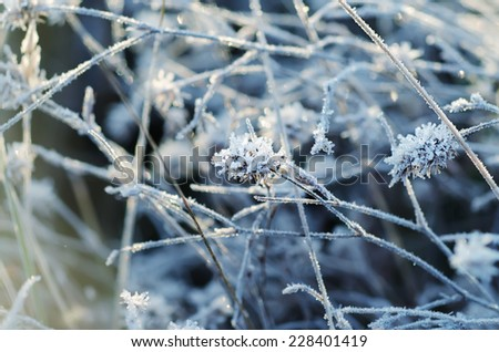 Frozen meadow flower, floral vintage winter  background, macro image - stock photo