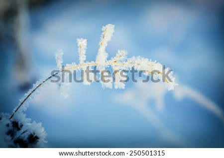 Frozen meadow plant, natural vintage winter  background, macro image - stock photo