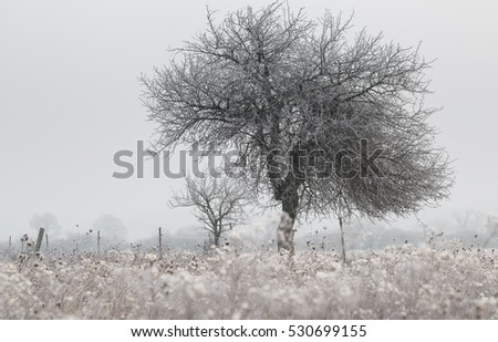 Frozen morning with tree