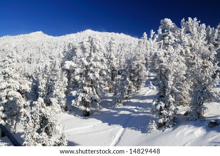 Frozen mountain forest on a sunny winter day at one of the Lake Tahoe ski resorts, Sierra Nevada, California