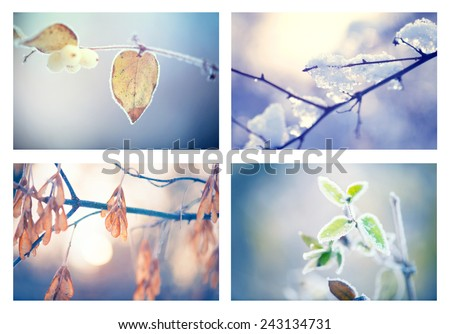 Frozen Nature. Beautiful collage of winter floral backgrounds. Winter nature background. Frozen branch with leaves closeup. Abstract Art design. Shallow DOF, soft focus  - stock photo