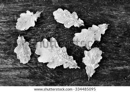 Frozen oak leaves on the wooden table (soft focus)
