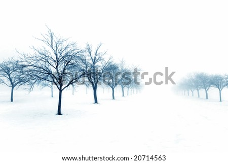 Frozen orchard on a snowy day - stock photo