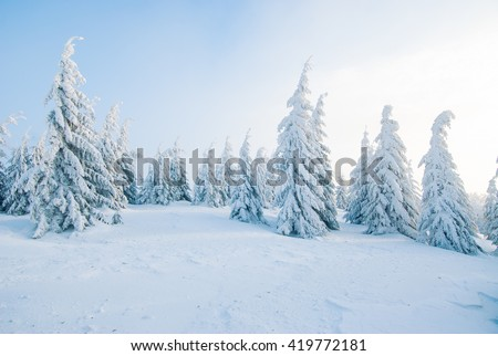 Frozen pine trees on the foggy winter alpine hillside slopes in beautiful sunlight - stock photo