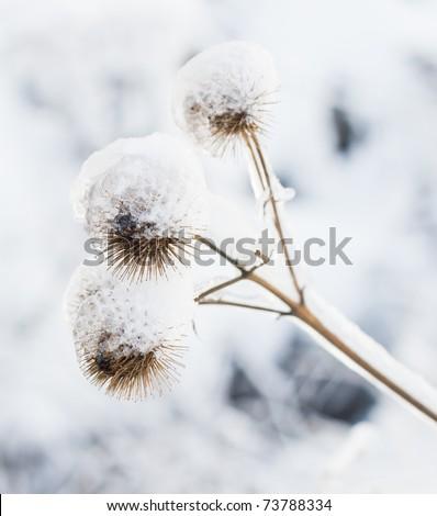 frozen plant - stock photo