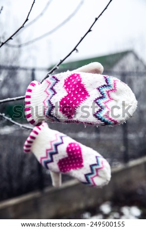 Frozen plant with beautiful warm gloves - stock photo
