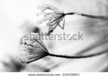 Frozen plants and leaves with details at the end of autumn. Image has grain texture visible on its maximum size - stock photo