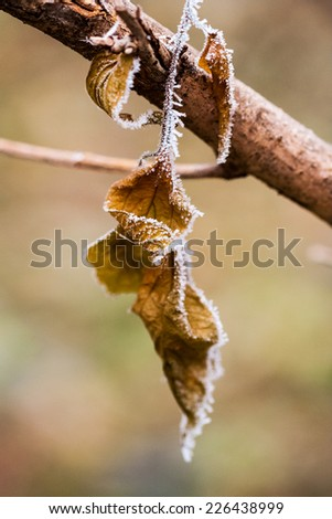 Frozen plants and leaves with details at the end of autumn. Image has grain texture visible on its maximum size
