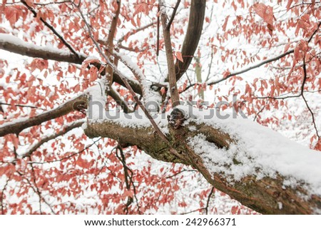 Frozen plants and leaves with details at the end of autumn in first snowy day - stock photo