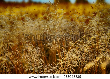 Frozen plants in meadow in autumn with morning light - stock photo