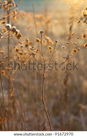 frozen plants in meadow in winter with morning light - stock photo