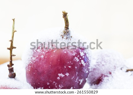 Frozen red grapes A white flake ice, - stock photo