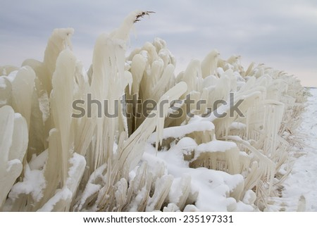 Frozen reed along the shore of a lake during cold winter. Ice and snow with a grey sky.