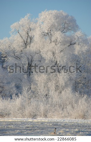 Frozen river and little swan - stock photo