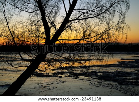 Frozen river and tree against sunset