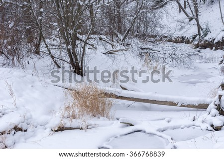 frozen river in the forest of felled trees and ice
