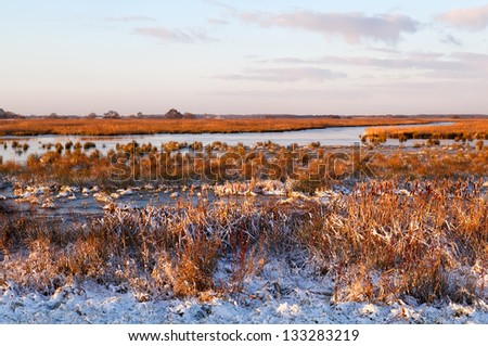 frozen swamp in sunrise during winter, Drenthe