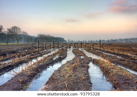 Frozen tire tracks on a maize field in winter - stock photo