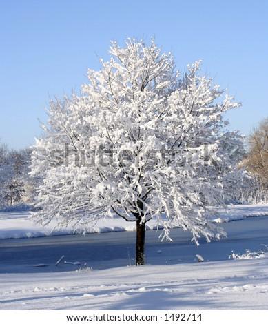 frozen tree - stock photo