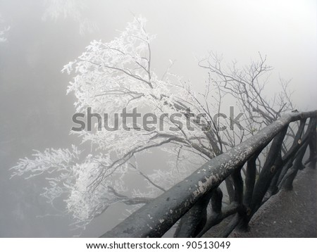 Frozen tree at the cliff - stock photo