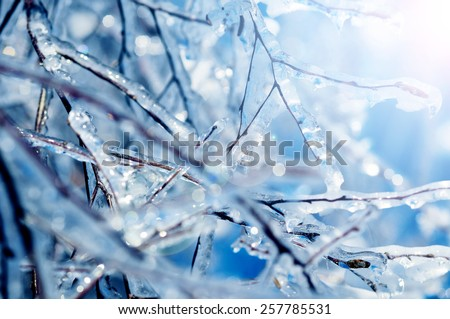 Frozen tree branches with blue icicles - stock photo