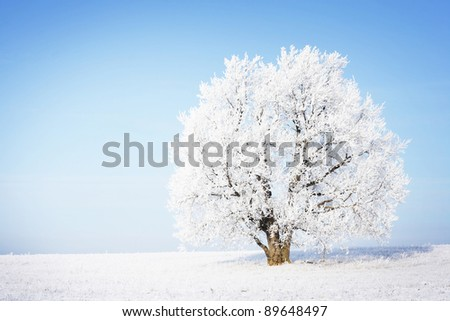 Frozen tree in field with clear blue sky on the background.