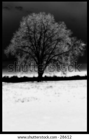 Frozen Tree in Georgia - stock photo