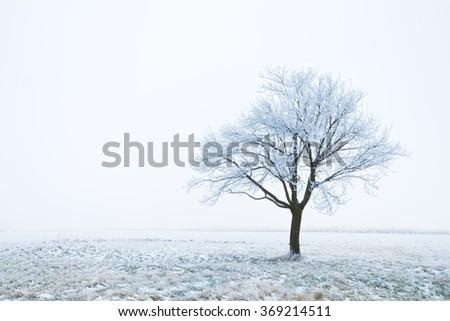 Frozen tree on a field - stock photo