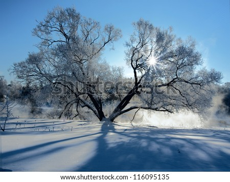 Frozen tree on a riverbank at winter - stock photo