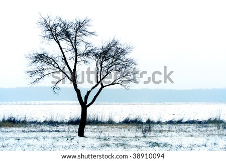 Frozen tree on a snowy field - stock photo