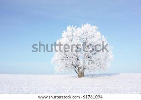 Frozen tree on winter field