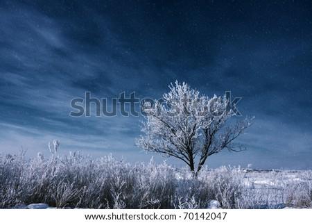 Frozen tree on winter field - stock photo